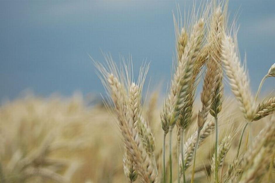 Presja na wzrost cen zbóż w kraju