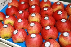 Promocja krajowych jabłek deserowych Kings and Apples zostanie przedłużona?