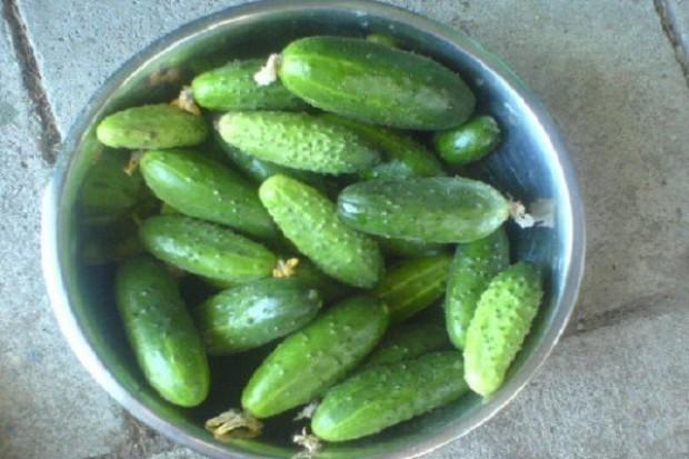 Jeśli warzywny kryzys potrwa, cena ogórków może wzrosnąć do 10 zł/kg