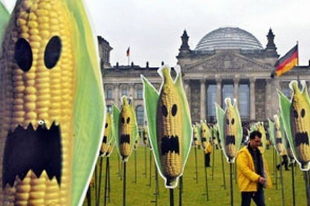 Przeciwnicy GMO protestowali przed parlamentem