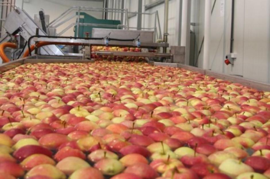 Zbiory owoców będą gorsze niż w zeszłym roku