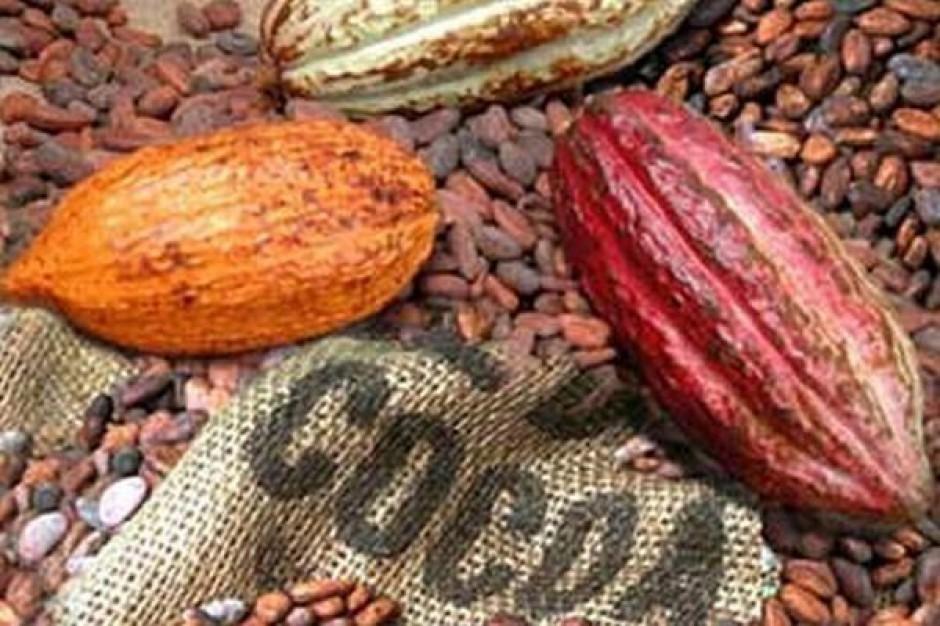 Niższa jakość azjatyckich zbiorów kakao