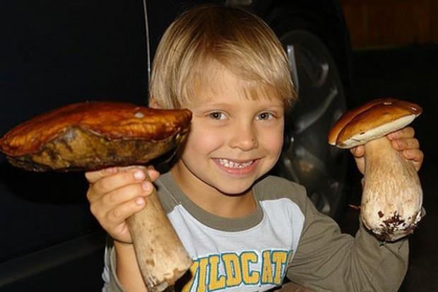 Dzieci nie powinny jeść grzybów. Mogą się zatruć