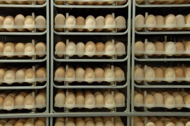 Polscy producenci jaj mogą mieć problemy z eksportem do krajów UE