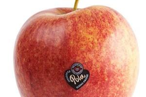 Jabłka Pola pojawią się również na światowych rynkach