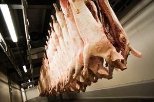 Produkcja świń w I połowie 2012 r. spadnie w Polsce o 9,2 proc.!