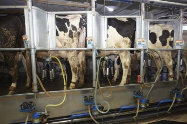 Trend wzrostowy skupu mleka stopniowo wyhamowuje