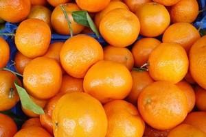 Mniejsze zbiory pomarańczy i cytryn w sezonie 2011/2012