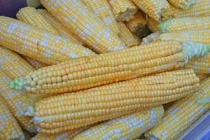 USA światowym gigantem w uprawach GMO