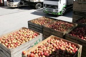 Zapasy jabłek w Polsce najwyższe w ostatnich pięciu latach
