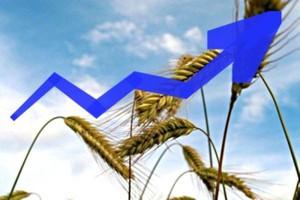 Ceny giełdowe zbóż poszybowały