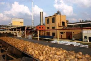 Pepees chce stworzyć holding skrobiowy na kształt Polskiego Cukru