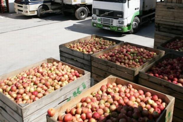 Wyjątkowo wysoki stan zapasów jabłek w unijnych magazynach