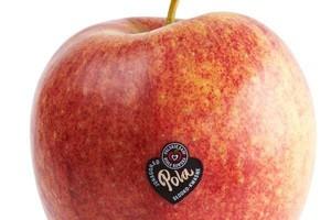 Produkcja jabłek w Polsce koncentruje się