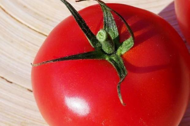 Z roku na rok zmniejsza się wielkość zbiorów pomidorów przemysłowych