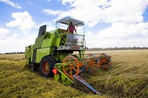 Światowa produkcja zbóż wzrośnie do nowego rekordu
