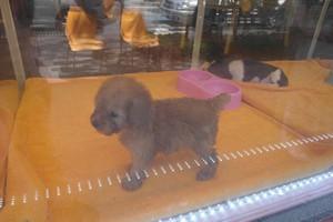 W Korei spada spożycie psiego mięsa