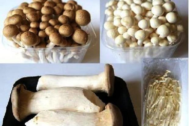 Egzotyczne grzyby od Gardenii