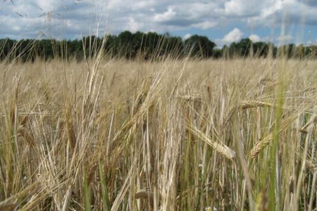 Eksport zbóż z Ukrainy wzrósł blisko dwukrotnie