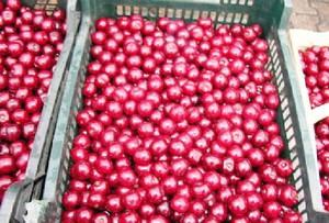 """Prezes Sokpol Koncentraty: Ceny skupu wiśni bedą """"niebezpieczne"""" dla przetwórców"""