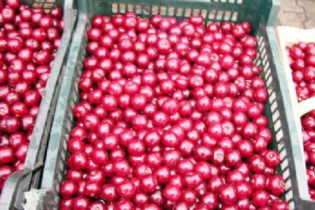 Prezes Sokpol Koncentraty: Ceny skupu wiśni bedą