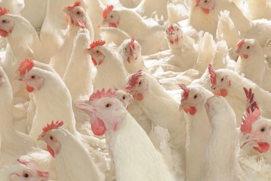 Nowe przepisy dotyczące ekologicznej produkcji drobiu i wieprzowiny