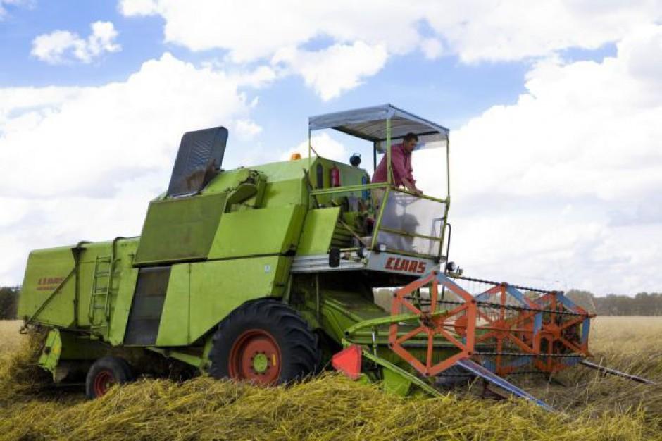 Pogoda utrudnia zbiory zbóż