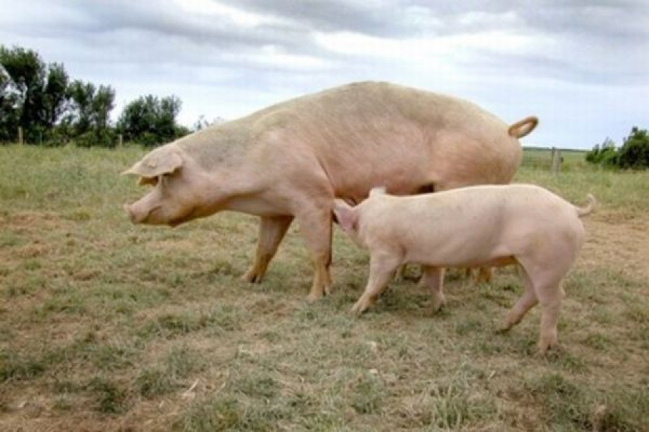 Światowa produkcja mięsa będzie rosła, ale wolniej