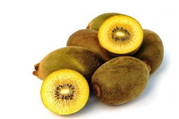 Coroczne zbiory owoców kiwi we Włoszech to około 70 proc. zbiorów na całej półkuli północnej