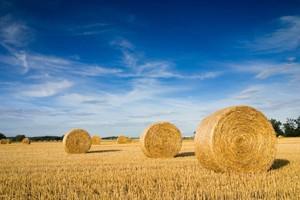 Strategie Grains: Tegoroczne zbiory zbóż w UE są niższe o 5,4 proc.