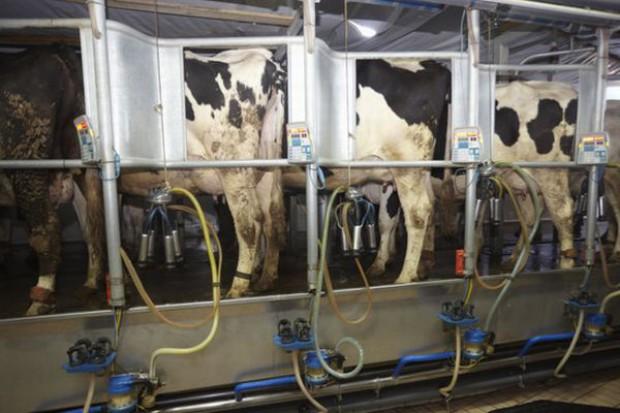 Rosną ceny skupu mleka w Polsce
