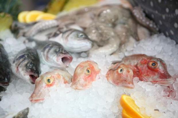 IERiGŻ: Krajowe połowy ryb w br. spadną do 217,5 tys. ton