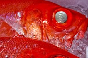 Liczba ryb ma wzrosnąć, ale w Polsce może zabraknąć kutrów