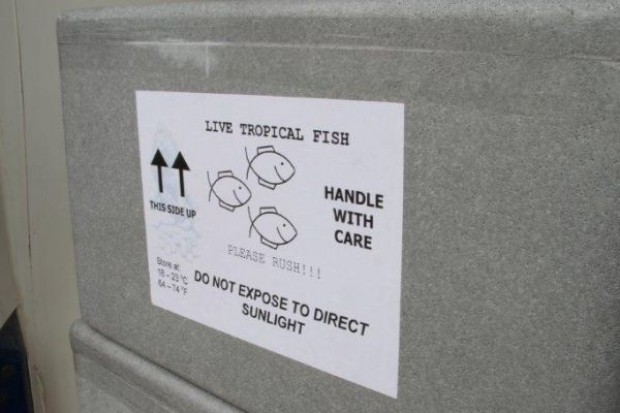 Global Fish sprowadził do Polski 140 tys. sztuk tilapii czerwonej