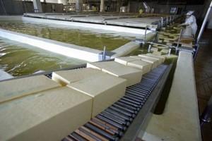 Wzrost produkcji większości przetworów mleczarskich