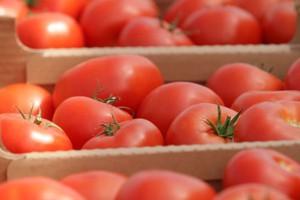 Firma T.Mularski zainwestuje 250 mln zł w szklarnie pomidorów