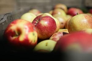 Rekordowy import jabłek do Rosji w styczniu br.
