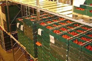 Powstaje coraz mniej grup producentów owoców i warzyw