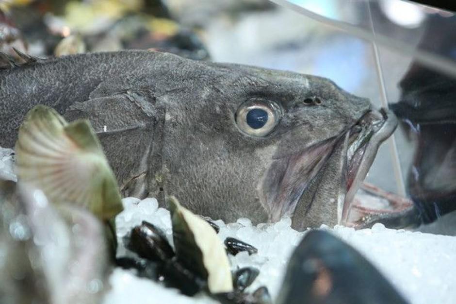 Jakość mrożonych ryb jest fatalna