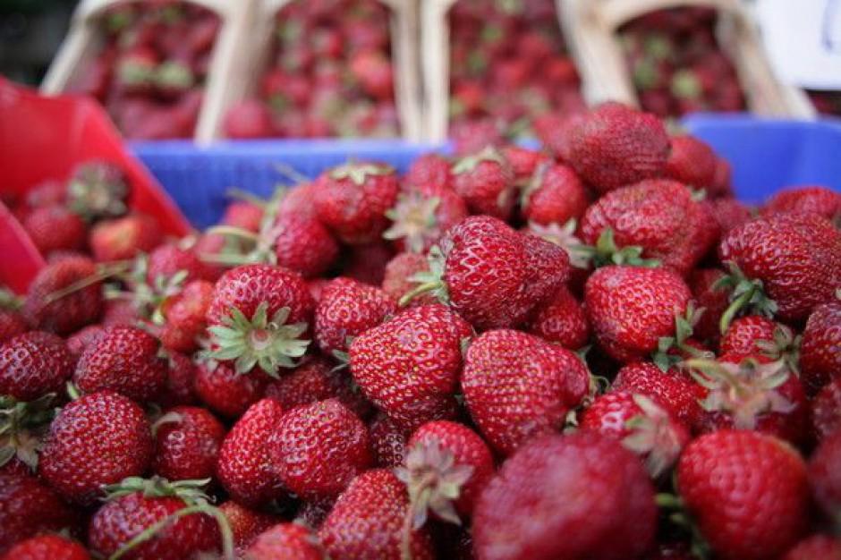 Ceny truskawek w skupie zdecydowanie niższe niż przed rokiem