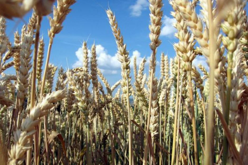 Prognozy produkcji zbóż na świecie nadal bardzo dobre