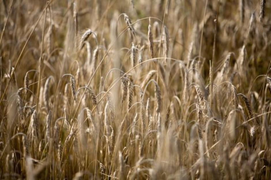 Ukraina spodziewa się wysokich zbiorów zbóż