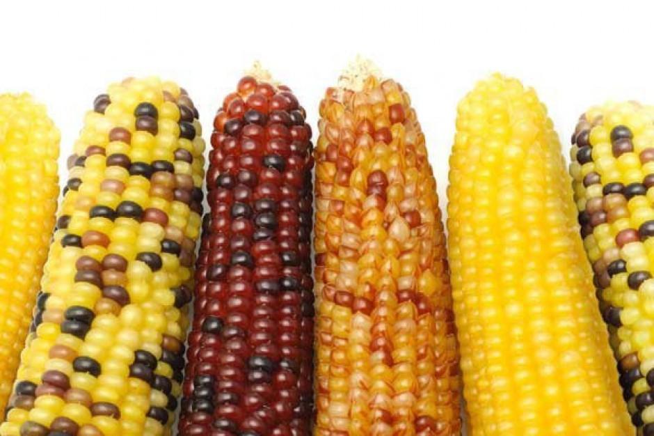 UE poniosła 9,6 mld euro strat z powodu powolnego wdrażania GMO