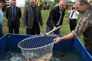 Stawy Milickie zainwestowały zwiększenie hodowli karpia i innych ryb