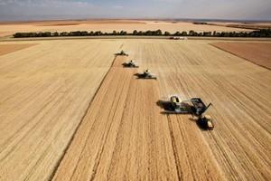 FAO: Światowa produkcja zbóż wzrośnie o ponad 7 proc.
