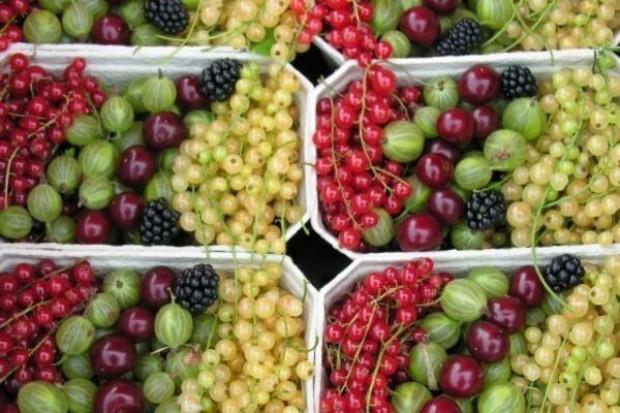 Owoce miękkie w skupie tańsze niż przed rokiem