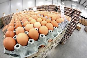 Rozbite jaja w proteście przeciwko ich niskim cenom