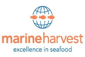 Marine Harvest ma za sobą rekordowy kwartał