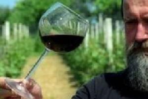 W Sandomierzu uczą uprawy winorośli