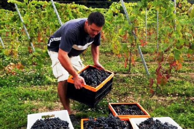 15 winnic znalazło się na Małopolskim Szlaku Winnym